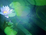 Water Lilies Premium PowerPoint Templates