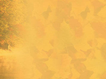 Free fall powerpoint backgrounds autumn ppt background powerpoint fall autumn 07 powerpoint templates free fall powerpoint backgrounds toneelgroepblik Choice Image