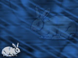 Rabbit PowerPoint Templates