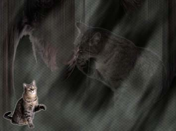 Cat: Tabby PowerPoint Templates