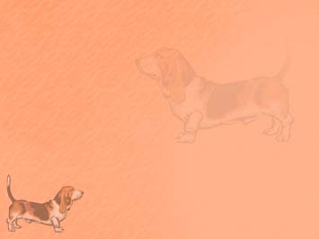 Dog: Basset Hounds PowerPoint Template