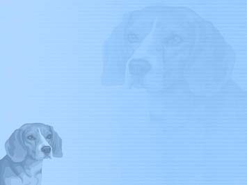 Dog: Beagle PowerPoint Template