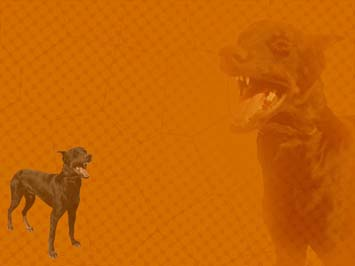Dog: Doberman PowerPoint Templates