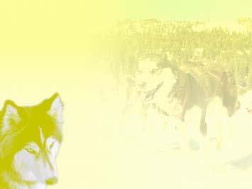 Dog: Huskies 01 - PowerPoint Templates