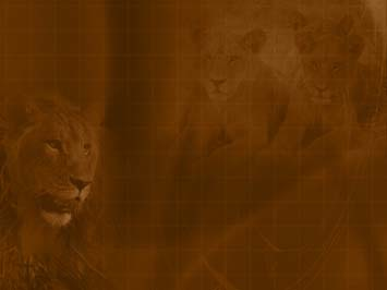 Lion PowerPoint Templates