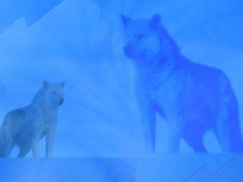Wolf PowerPoint Templates