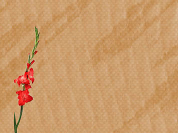 Gladiolus PowerPoint Templates