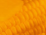 Corn PowerPoint Templates