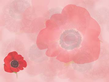 Remembrance Day PowerPoint Templates