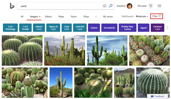 Image search results for cacti