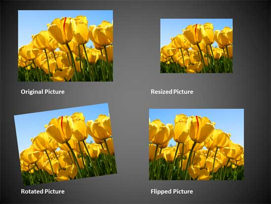 Variants of the same picture applied with resize, rotate, and flip options